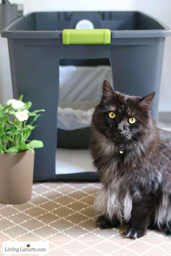 Cat Litter Box DIY  Hidden Kitty Litter Box Ideas DIY Cat Litter Holder