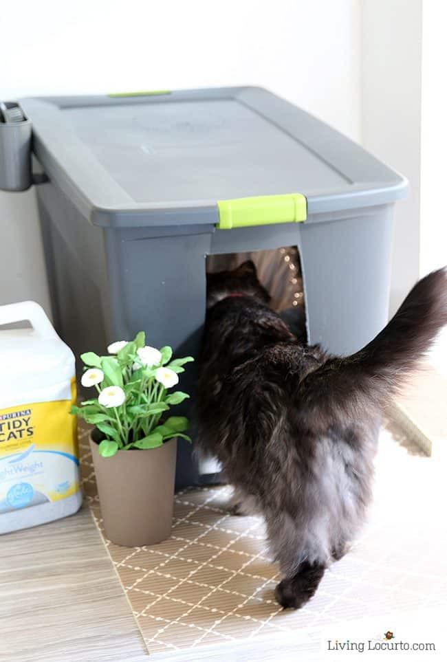 Cat Litter Box DIY  10 Amazing Ways to Spoil Your Cat Fun Cat Toys Living