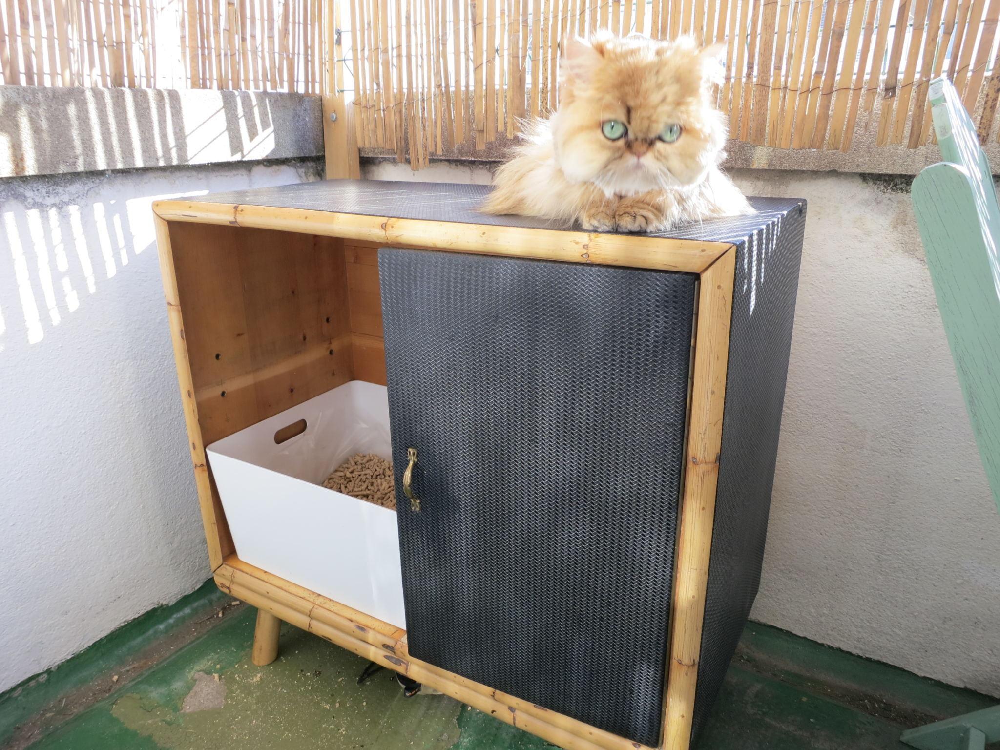 Cat Litter Box DIY  DIY cat litter box