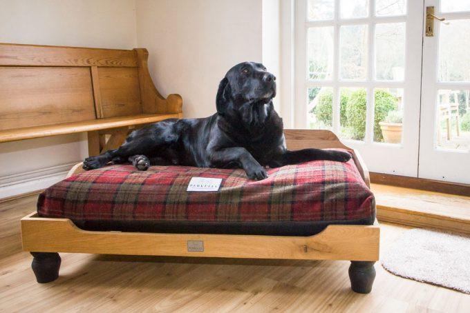 DIY Dog Bed Frame  DIY Dog Bed Frame Step by Step DIY Guide and Expert s Advice