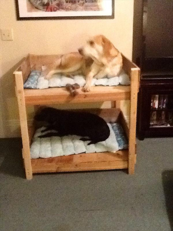 DIY Dog Bed Frame  DIY Pet Bunk Bed Plans to Build Dog Bed