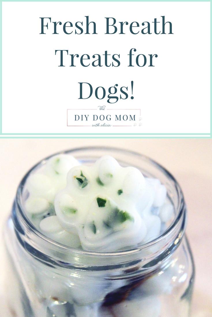 DIY Dog Breath Freshener  Keep Your Dogs Breath Fresh With DIY Treats Pawsify