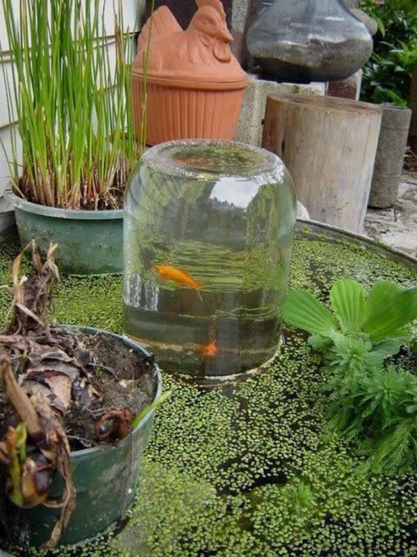 DIY Outdoor Aquarium  Outdoor aquarium Little Piece Me
