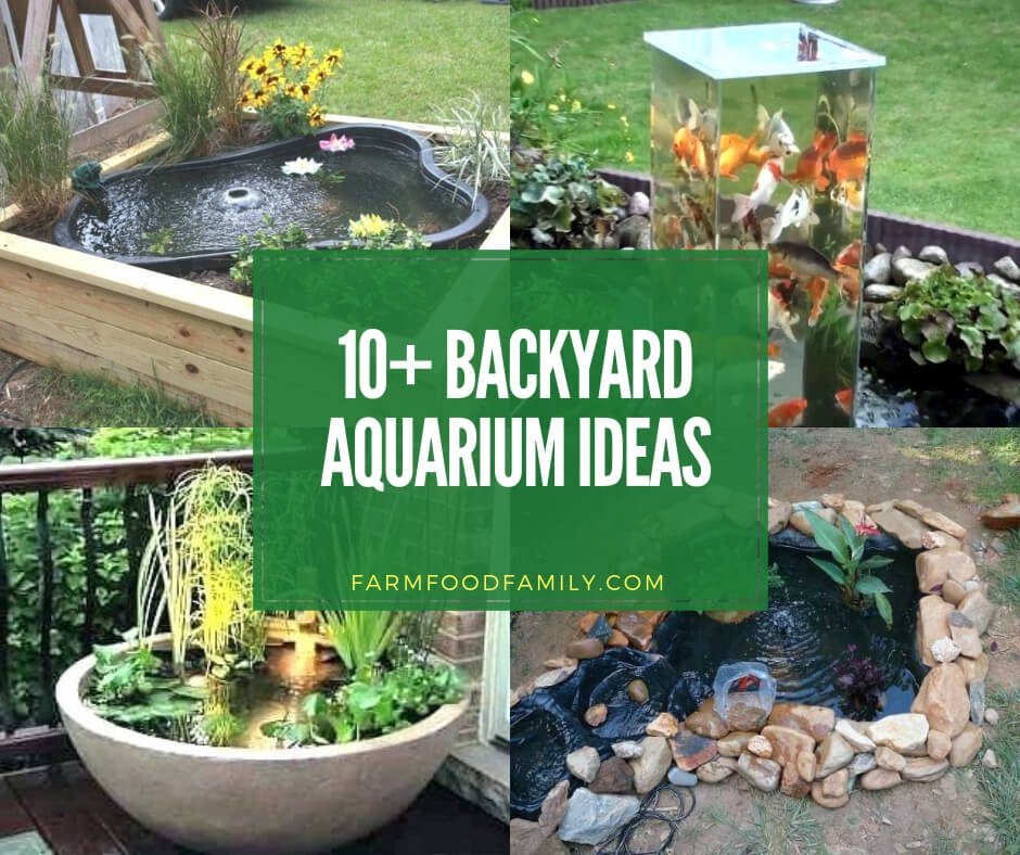 DIY Outdoor Aquarium  10 Awesome Backyard Aquarium Ideas & Designs For 2020