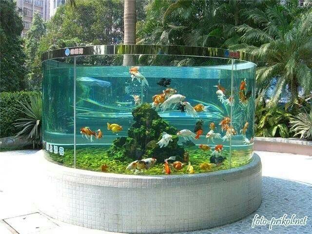 DIY Outdoor Aquarium  Pin by Maryann Perrey on Awesome aquariums