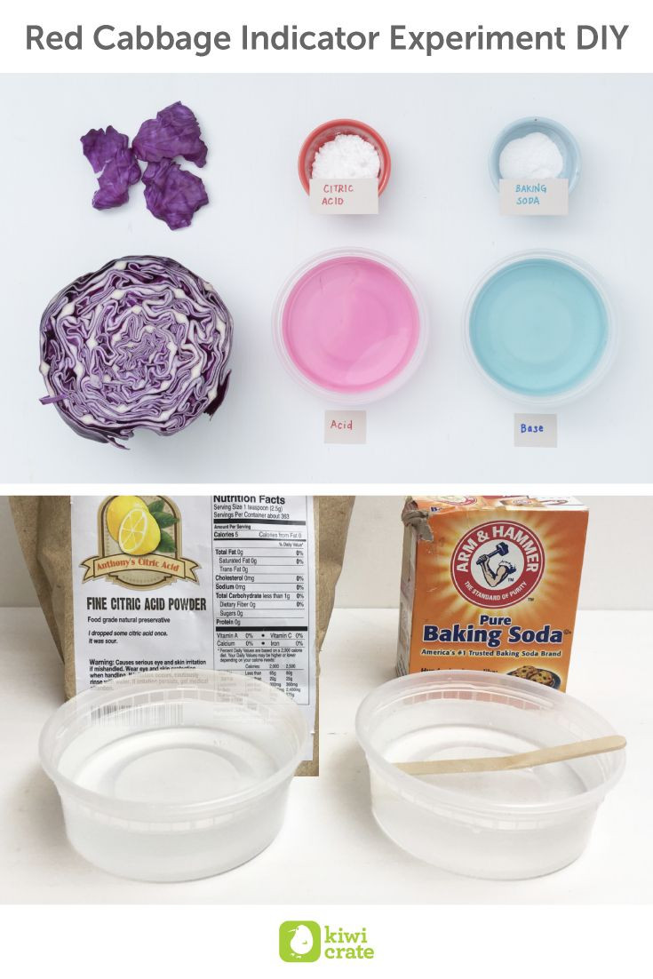 DIY Science Projects For Adults  Red Cabbage Indicator Experiment DIY Did you know we use