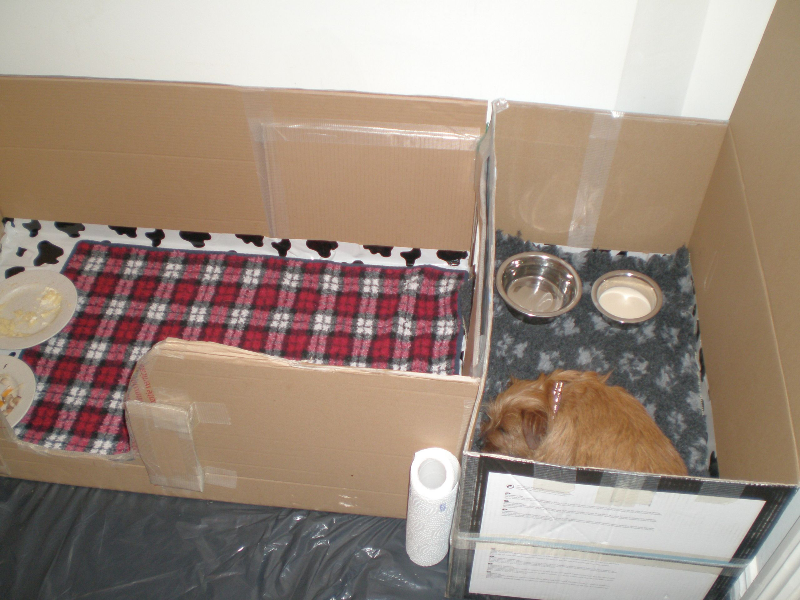 DIY Whelping Box  How to Build a Whelping Box for Small Dogs