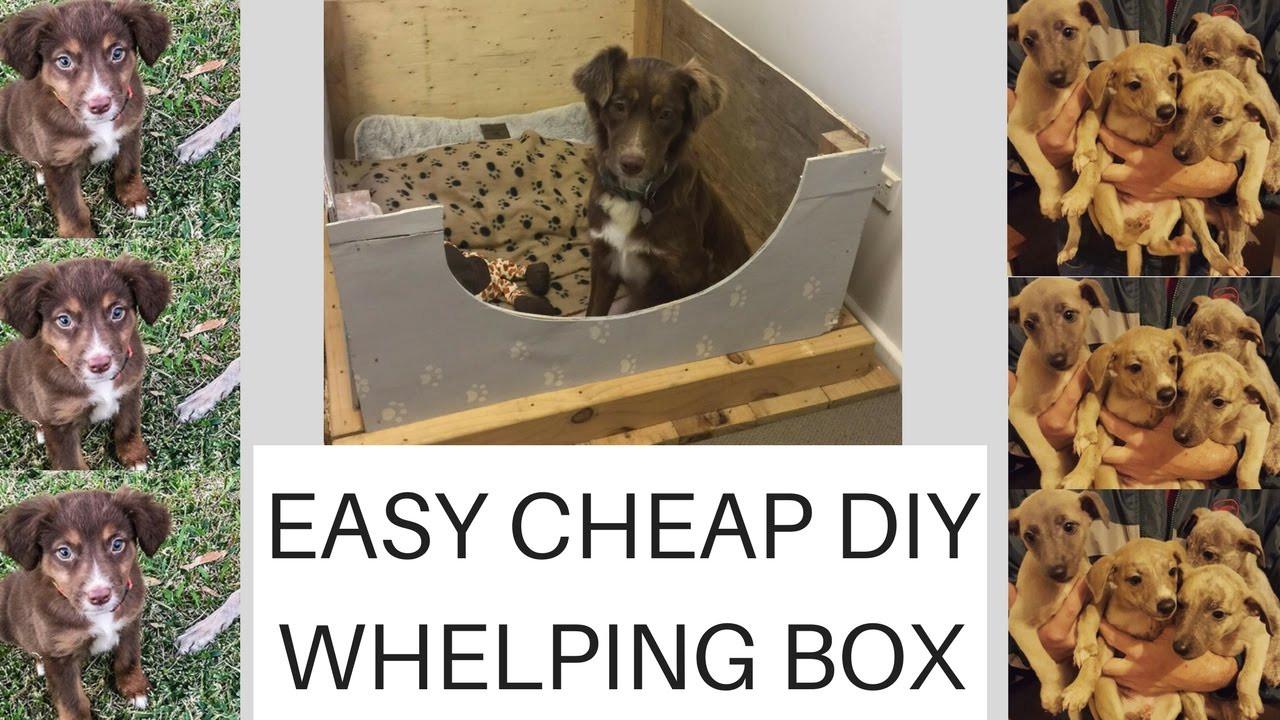 DIY Whelping Box  Easy Cheap Diy Whelping box plus PUPPY UPDATE