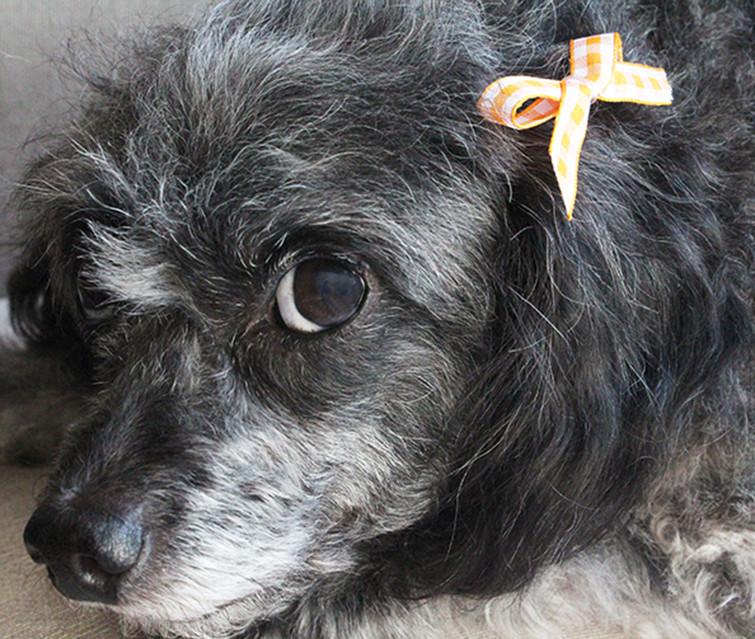 Dog Hair Bows DIY  DIY Dog Hair Bows • The Southern Thing