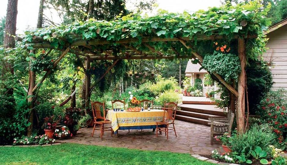 Growing Grapes In Backyard  20 Awesome Tips to Growing Grape in Your Home Backyard