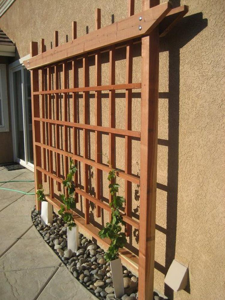 Growing Grapes In Backyard  20 Creative Tips To Growing Grape In Your Home Backyard