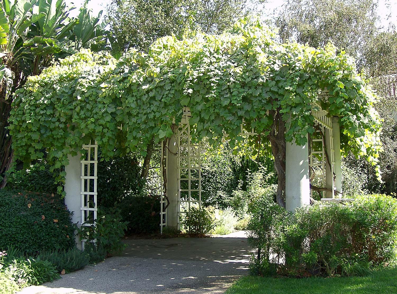 Growing Grapes In Backyard  10 Reasons You Should Be Growing Grapes In Your Backyard