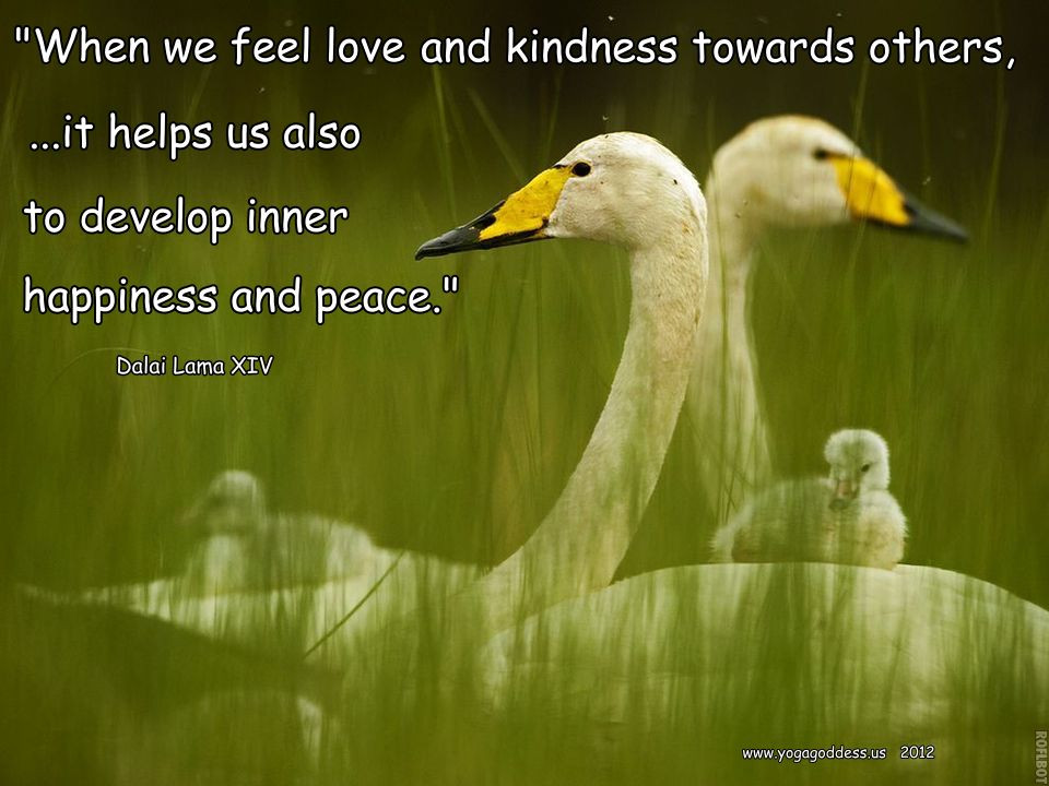 Loving Kindness Quotes  Buddhist Quotes About Loving Kindness QuotesGram