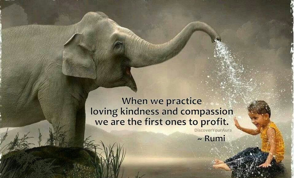 Loving Kindness Quotes  Quotes About Kindness And passion QuotesGram