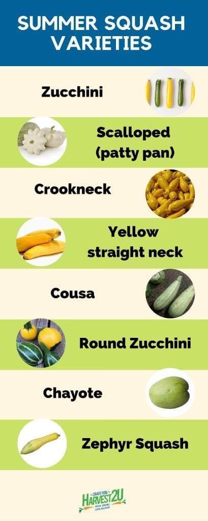 Summer Squash Nutrition  Summer Squash – A Versatile and Nutritious Ve able