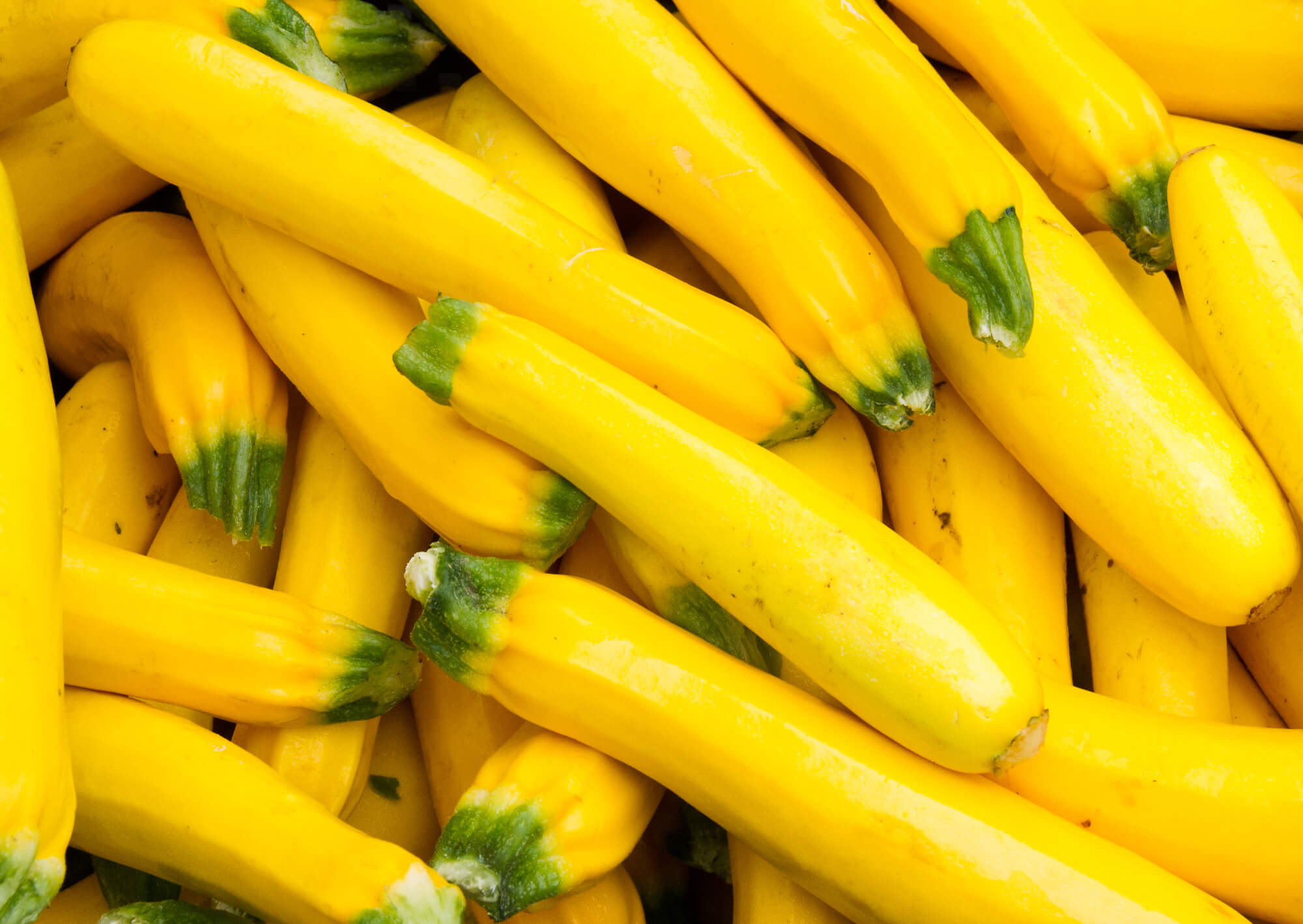 Summer Squash Nutrition  Yellow Squash Why You Should Start Eating This Veggie Now