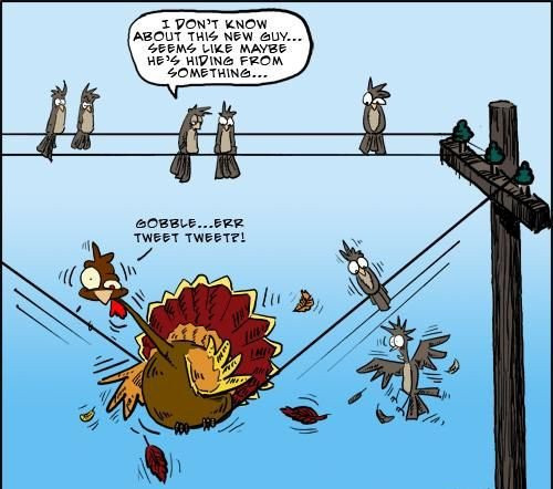 Thanksgiving Turkey Funny  Funny Thanksgiving Jokes And Sayings Collections