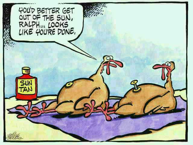 Thanksgiving Turkey Funny  Heart 2 Heart Friday Funnies Just in Time For Thanksgiving