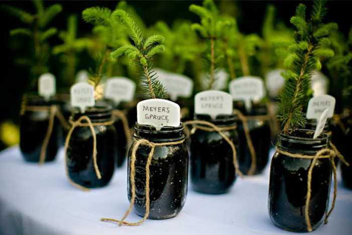 Tree Wedding Favors  DIY Wedding Plant Favors are Perfect for a Green Wedding