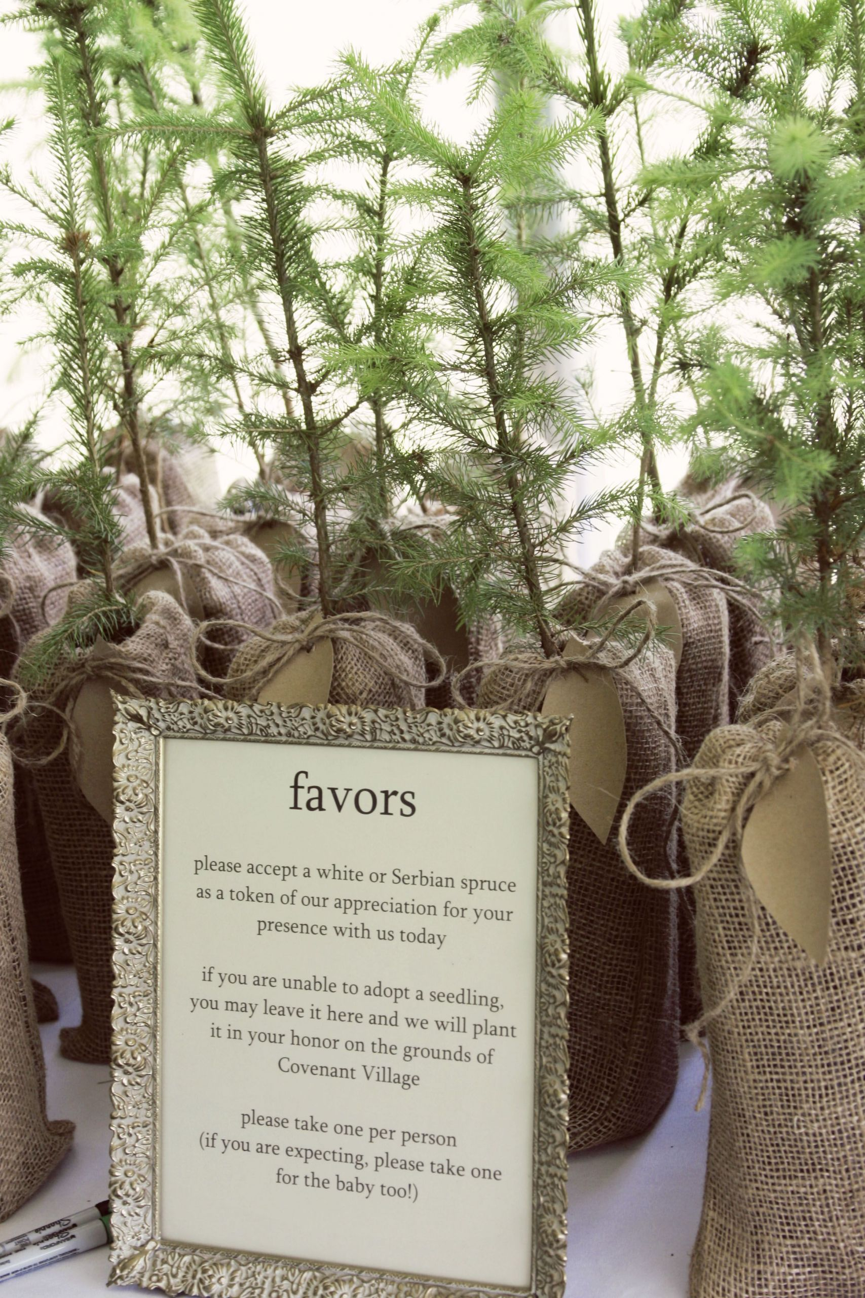 Tree Wedding Favors  plant a tree wedding party favors mmmm order from the