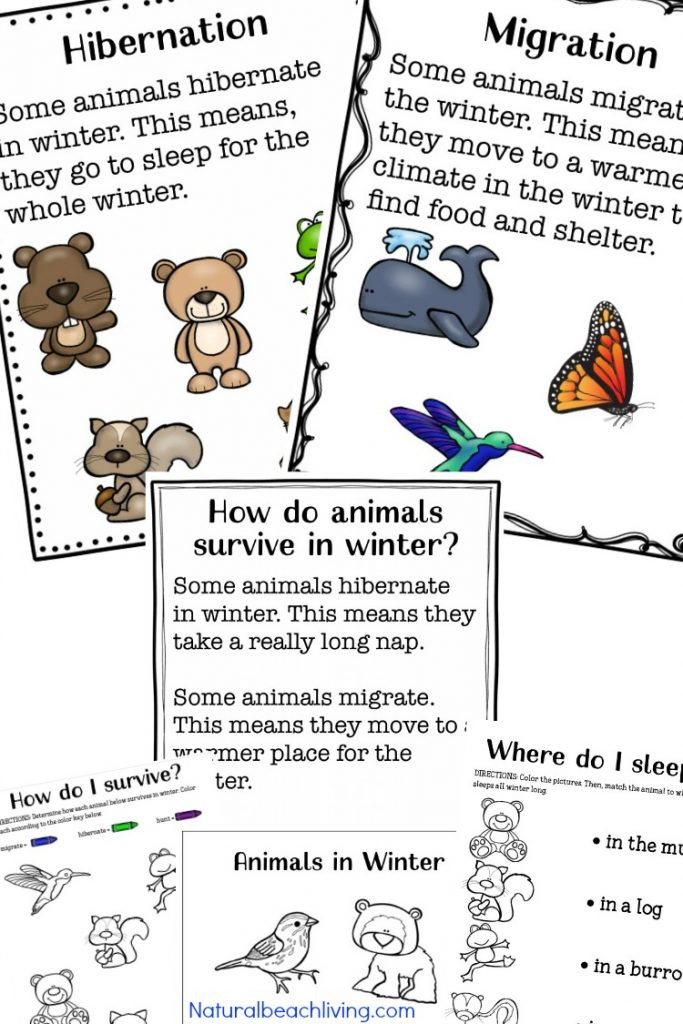 Winter Themed Activities For Preschoolers  35 Winter Preschool Themes and Lesson Plans Natural